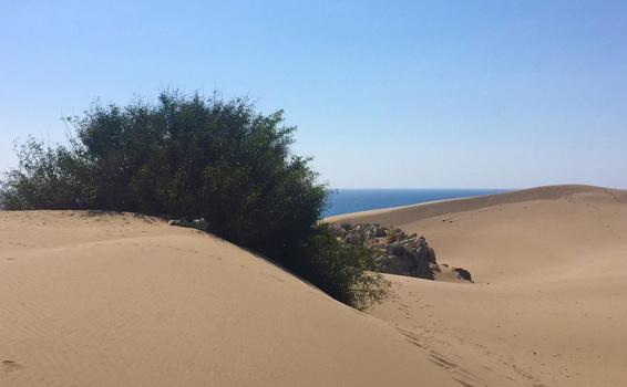 patara antik kenti plajı kum tepeleri