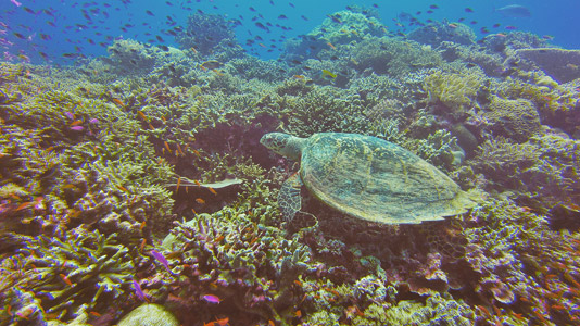 palawan adası tubbataha resifleri