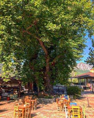 bayır köyü çınar ağacı gezi rehberi