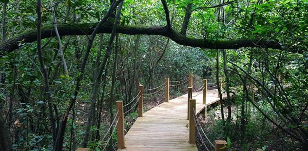günnücek orman kampı ve mesire yeri